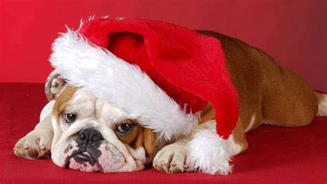 dogs staying   night   santa pictures dogtime
