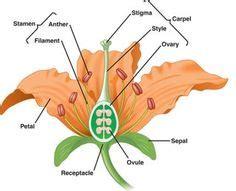 parts   flower images parts   flower