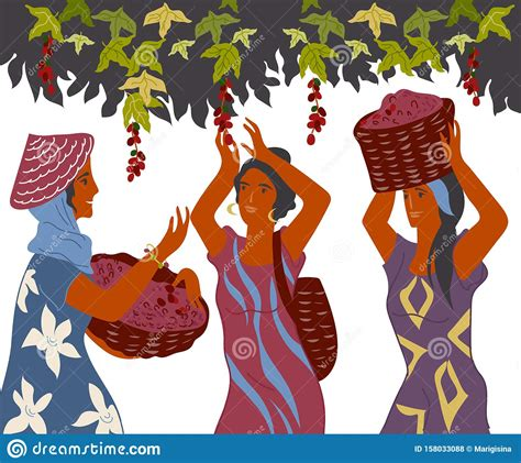 Harvesting stock photos and images (1,012,026). Coffee Harvest Gatherers In Work Flat Cartoon Vector Illustration Isolated. Stock Vector ...