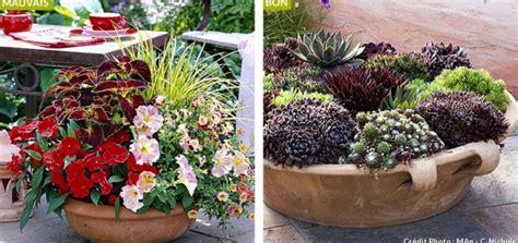 plante exterieur en pot sans entretien plante en pot exterieur sans arrosage pivoine etc