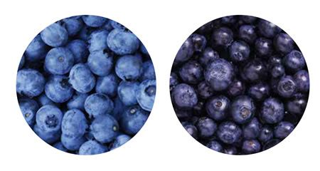 what color are blueberries blueberry grading machines airjet grading and sorting