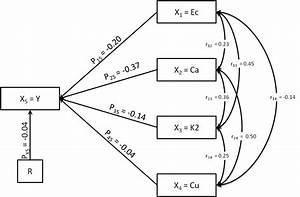 Flow Paths Diagram