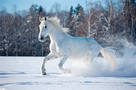 Animals In Snow Wallpaper - wallpaper animals snow winter 5k animals