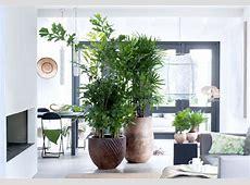 Trendy Planten & Interieur DroomHome Interieur & Woonsite