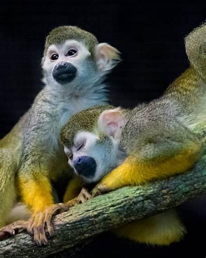 Monkey Squirrel Zoo Animals Reid Park
