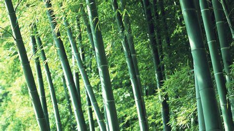 Papel Tapiz Verde De Bambú #2  1920x1080 Fondos De