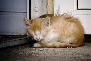 Homeless Cats Animals
