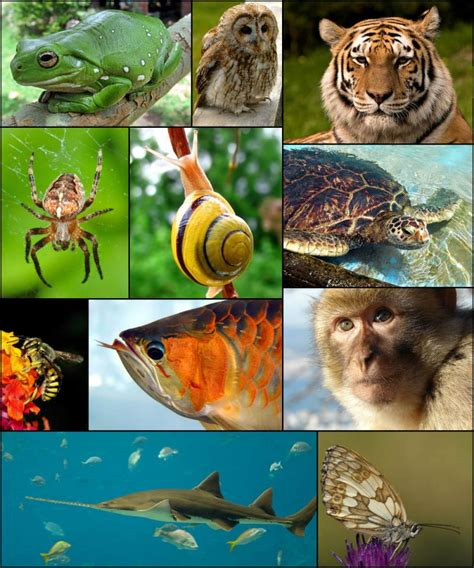 Klasifikacija životinja — Bionet Škola