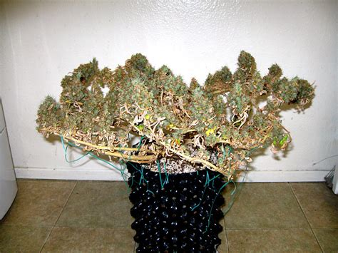 Best Cannabis Led Grow Lights by 13 Things I Wish I D Known Before I Started Growing Grow