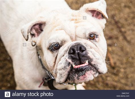Dog Funny Face Stock Photos & Dog Funny Face Stock Images ...