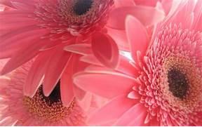 Pink Flower Background...