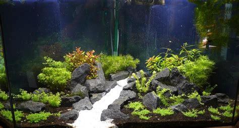 decorer un aquarium vide comment d 233 corer aquarium