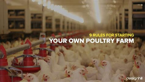 rules  starting   poultry farm