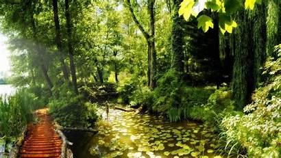 Natural Park Landscape Nature Bosque Paisaje Madera