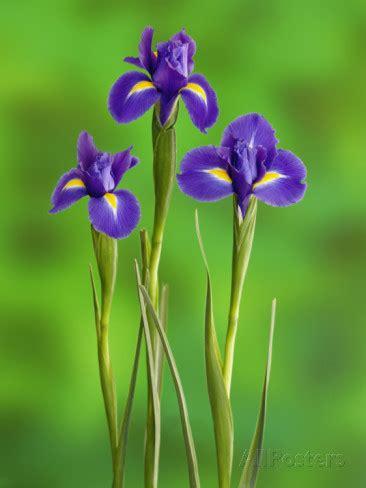 iris flower part  weneedfun