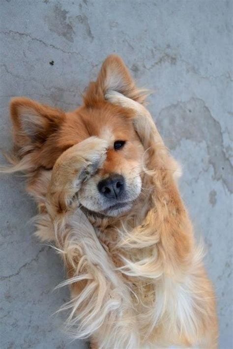 cute dog hiding  face luvbat