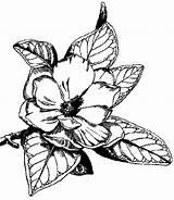 Flori Magnolii Coloriage Colorat Magnolia Fleurs Planter Planse Cu Enfant Gratuit Ligne Blanco Coloriages Blancodesigns Salvo Riscos Desenhos sketch template