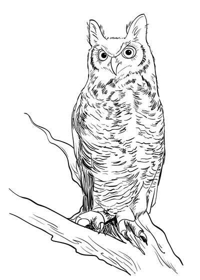 draw  realistic owl sketchbook challenge
