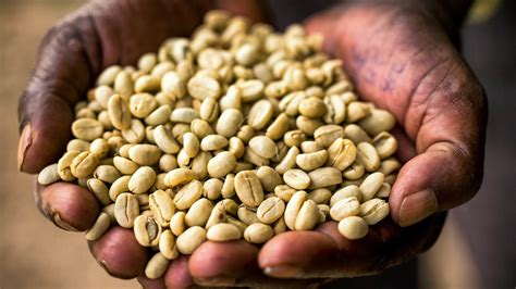 Ethiopia's Coffee Farmers Are 'On The Front Lines Of ...