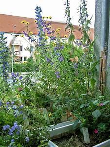 naturgartenbalkon welche wildstaudenarten koennen With katzennetz balkon mit wildlife garden ab