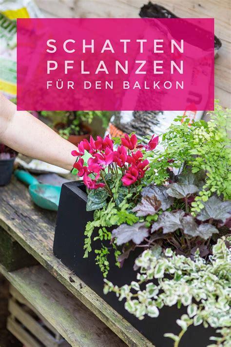 Blühende Pflanzen Schatten by Schattenpflanzen F 252 R Balkonk 228 Sten Farbe Und Struktur