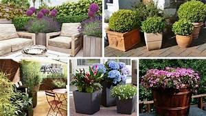 Kuebelpflanzen Fuer Terrasse : k belpflanzen drinnen oder drau en garten pflanzen ~ Orissabook.com Haus und Dekorationen
