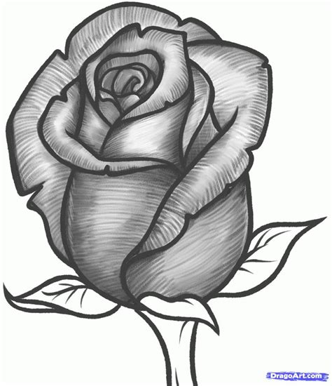 draw  rose bud rose bud step  rose sketch