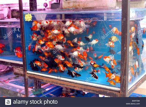 aquarium pet shop selling goldfish in plastic bags in the fish market stock photo royalty free