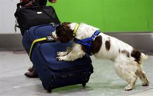 UK Anti-Doping investigates using sniffer dogs to combat ...
