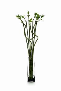 Waterlook ® Silk Lucky Bamboo in a Tall Glass Cylinder ...