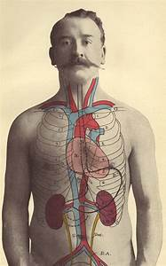 174 Best Kidney Diagram Anatomy Images On Pinterest