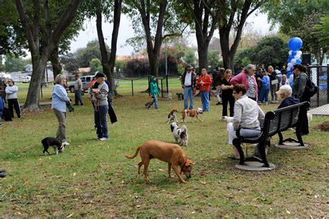 misbehaving   dog park  waggin tail academy