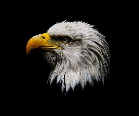 Painted Bald Eagle Head Photograph by Steve McKinzie