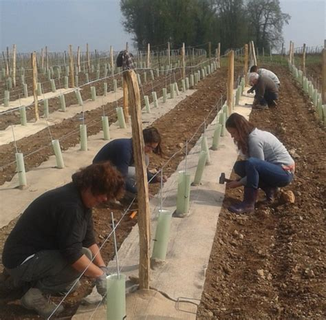chambre d agriculture loire viticulture oenologie viticulture des feutres