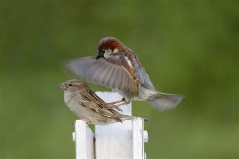 do house finches mate for 28 images fruits finch beaks