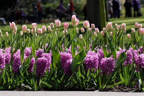 Bulb Garden by Layer Flower Bulbs This Fall For Spectacular Blooms In