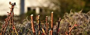 Wann Darf Ich Bäume Fällen : baumpflegeportal experten wissen antworten f r baumbesitzer ~ Eleganceandgraceweddings.com Haus und Dekorationen