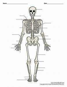 Frog Skeletal System Diagram Biology If8765 Answers