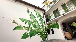 mona carons murals of weeds slowly overtake walls and With handmade textile weeds by miranda van dijk