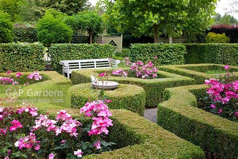 Gap Gardens  Formal Rose Garden With Clipped Buxus Box
