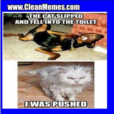 Funny Cat Memes Clean - funny clean memes google search funny pinterest memes funny memes and funny clean
