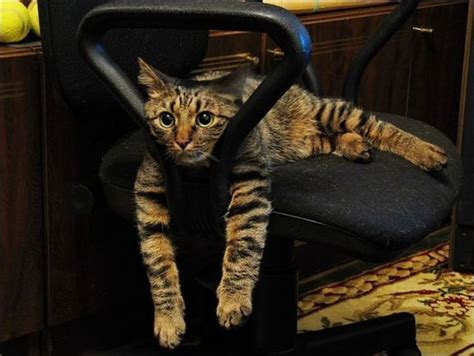 Cat In An Armchair. Stock Photos