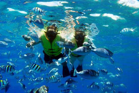 snorkeling pletternberg bay garden route western cape