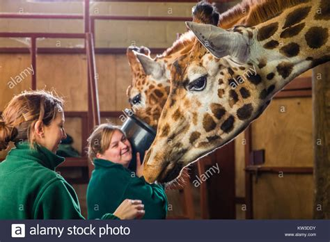 zoo keeper stock  zoo keeper stock images alamy