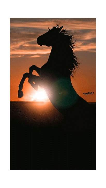 Sunset Horse Silhouette Rearing Horses Caballos Pretty