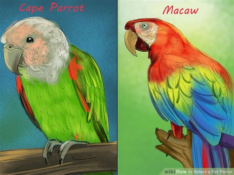 How To Select A Pet Parrot