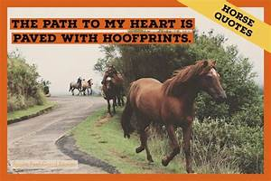 Best Horse Quot... Free Horses Quotes