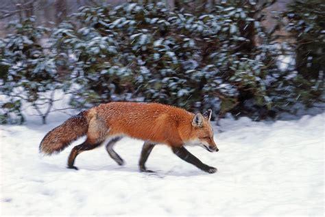 How Wildlife Handles Cold Weather That Won't Quit WBUR News