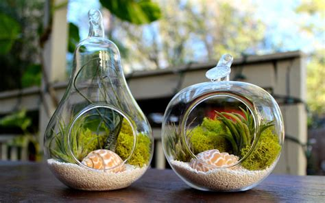 ideas for bathroom decorations cool terrarium ideas that you can copy