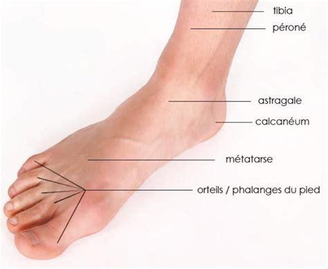 les halogenes sur pied sant 233 a la d 233 couverte de notre corps les pieds